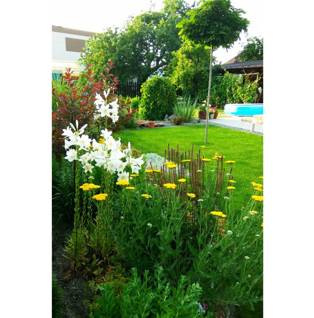 Svojpomocne vybudovaná záhrada s trvalkami, drevinami a liečivými rastlinami.