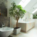 starostlivosť o izbové rastliny: presádzanie väčších druhov, izbovka v kúpeľni