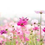 Letničky do farebnej záhrady: Krasuľky