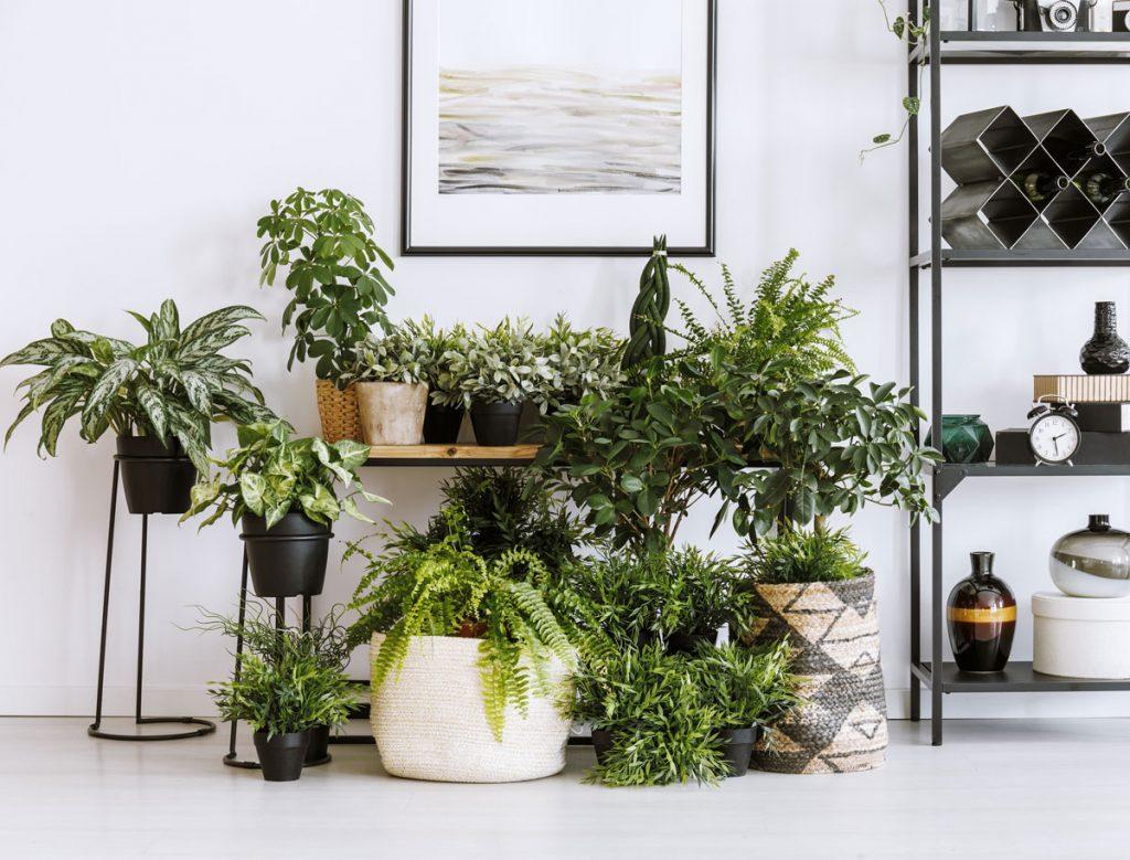 ako na presádzanie izbových rastlín