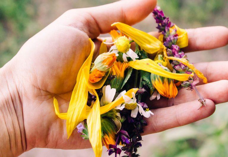 Tieto bylinky môžete zbierať už v apríli