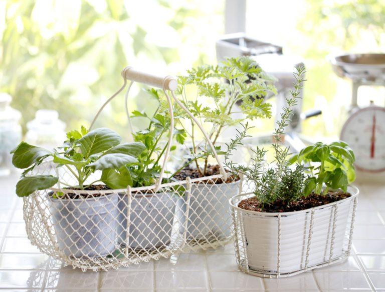 7 bylinkových tipov a trikov, ktoré určite využijete vo svojej domácnosti