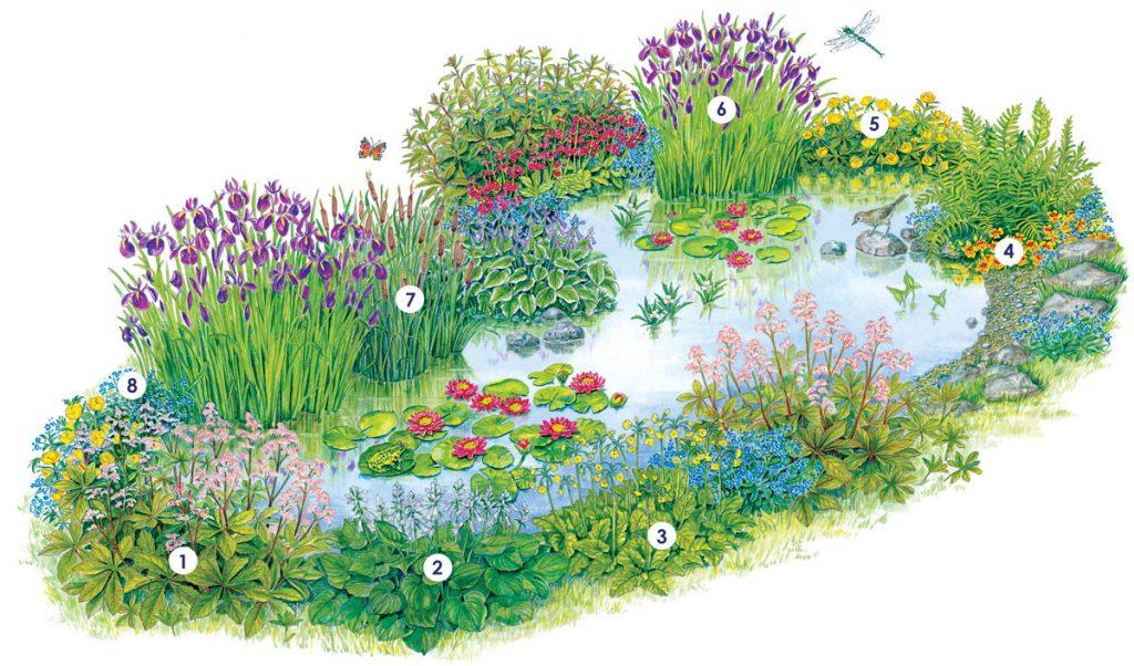 Zoznam rastlín na výsadbu k jazierku.