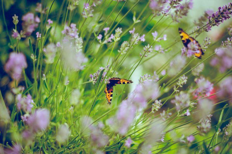 Tieto práce v okrasnej záhrade si naplánujte na jún
