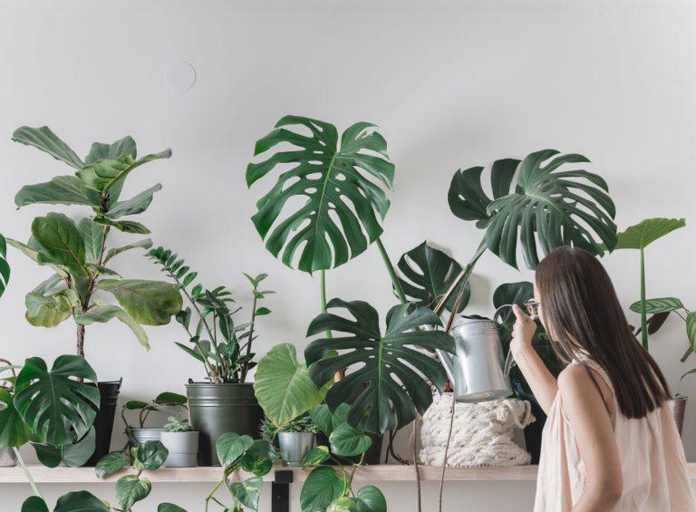 Ak máte tmavý byt, porozhliadnite sa po týchto rastlinách