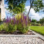záhony šalvie lúčnej,okrasných tráv a ruží oddelené od trávnika zapusteným betónovým okrajom