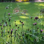 Detail na výsadbu kvetov v prírodnej záhrade, lákajúce rôzne druhy užitočného hmyzu