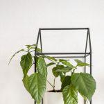 Dekorácia v podobe domčeka s rastlinou