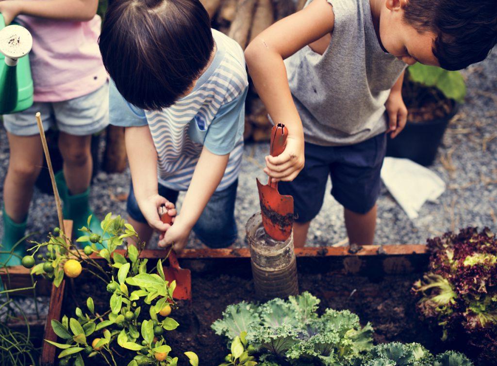 Čo vysadiť do balkónovej záhradky pre deti: deti starajúce sa o vyvýšený záhon