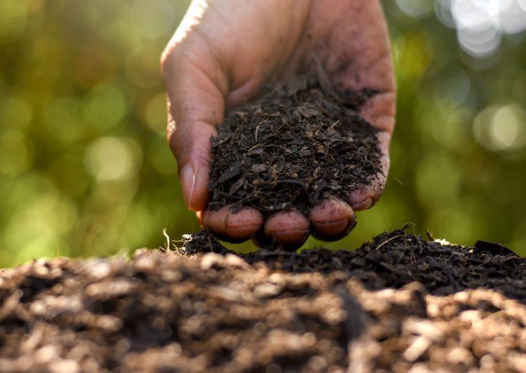 Dá sa zúrodniť ílovitá zem? Je to náročné, ale nie nemožné