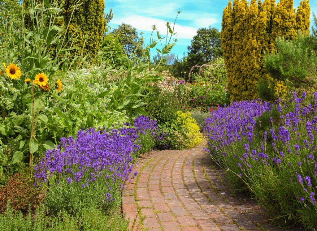 Záhrada s okrasnými záhonmi a drevinami s chodníkom uprostred