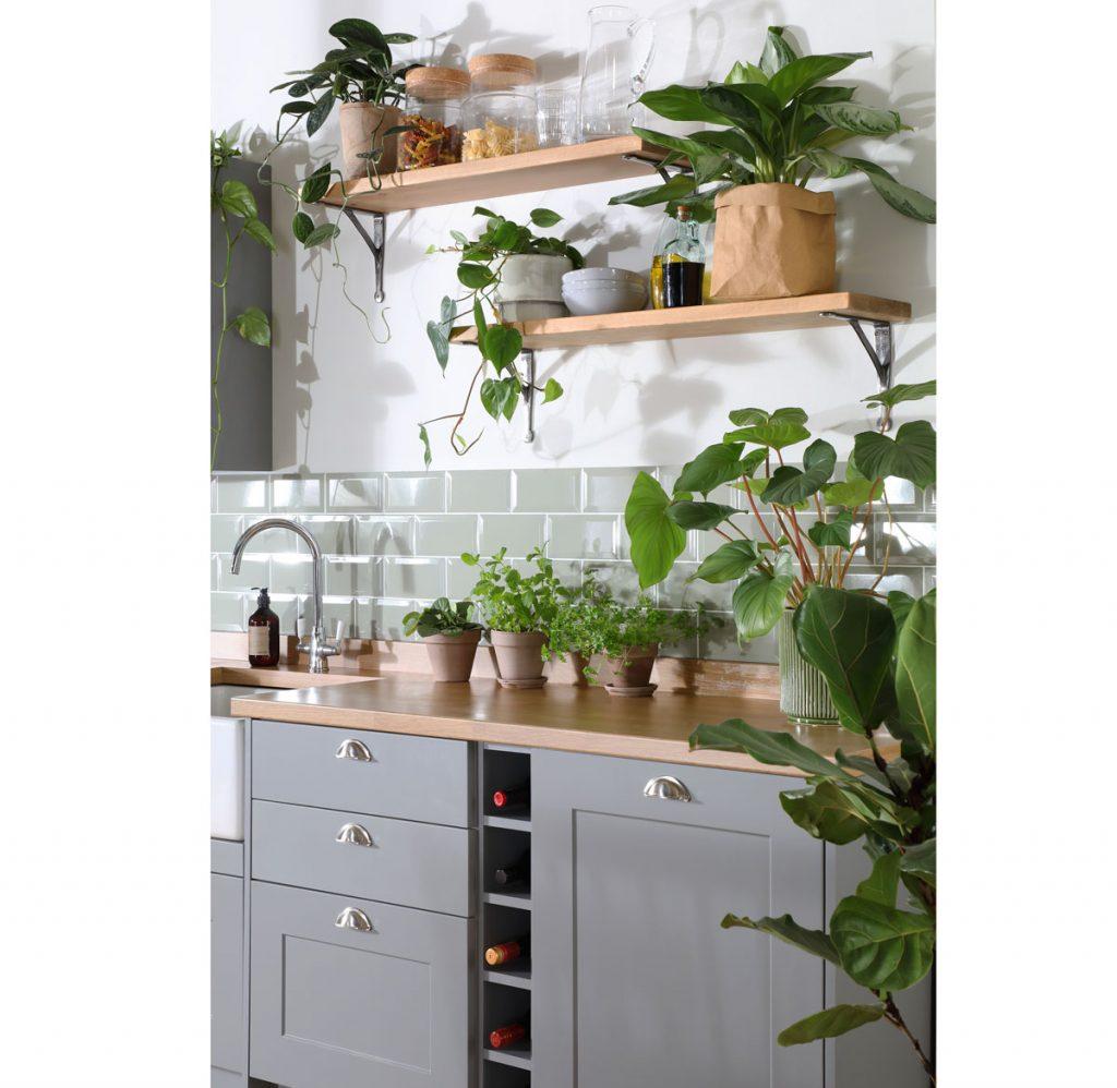 Vidiecka kuchyňa so zelenými izbovými rastlinami