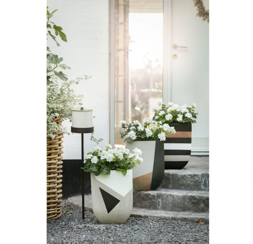 Muškáty v dizajnových betónových kvetináčoch.