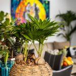 Detail izbovej rastliny v prírodnom kvetináči, ktorá je súčasťou kuchyne