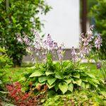 Detail trvalkových záhonov v záhrade