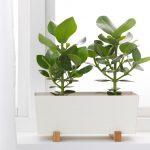 kvetináč pre bylinky či rastliny okrasné listom
