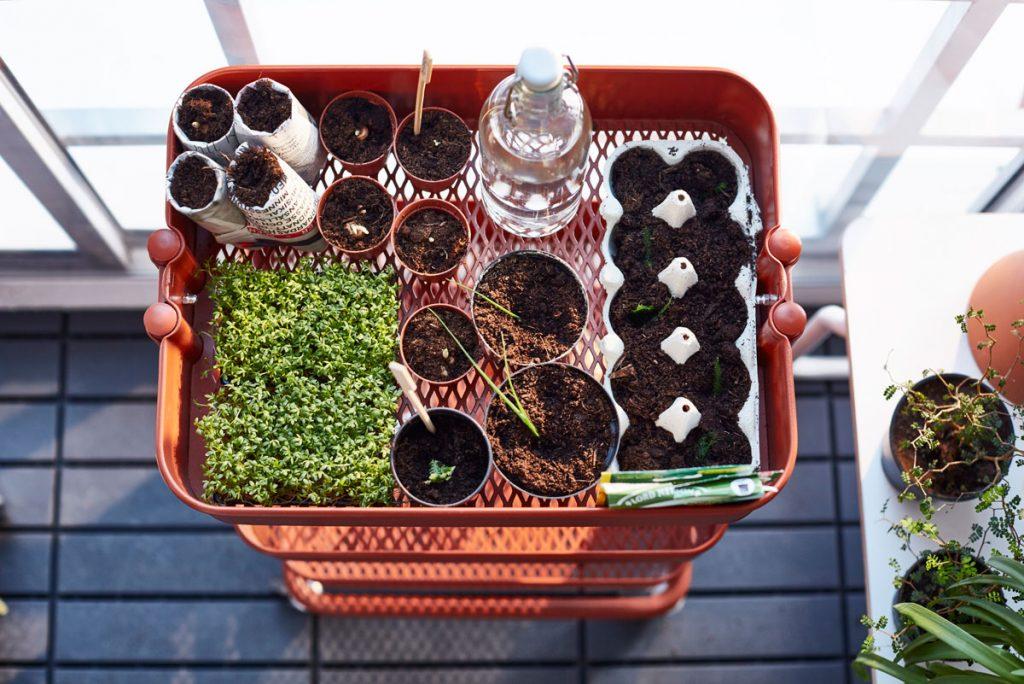 Pestovanie baby šalátov na balkóne a v byte
