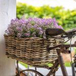 Starý bicykel ako jednoduchý, no efektný aranžmán.