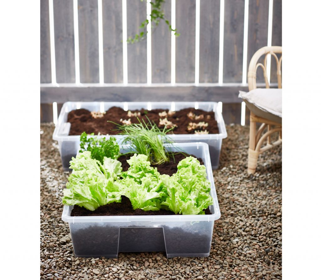pestovanie baby šalátov na balkóne v plastových košoch