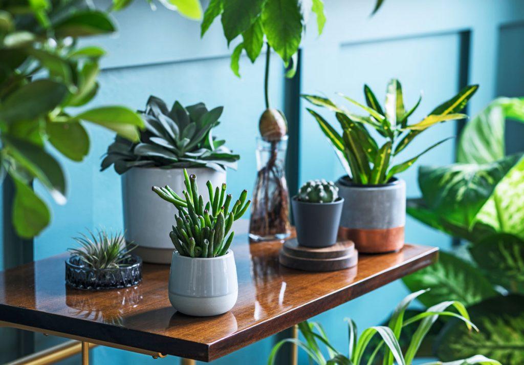 Izbové rastliny v rôznych dizajnových kvetináčoch