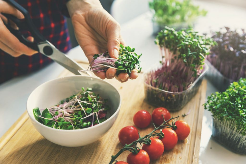 Pestovanie baby šalátov v byte: strihanie úrody