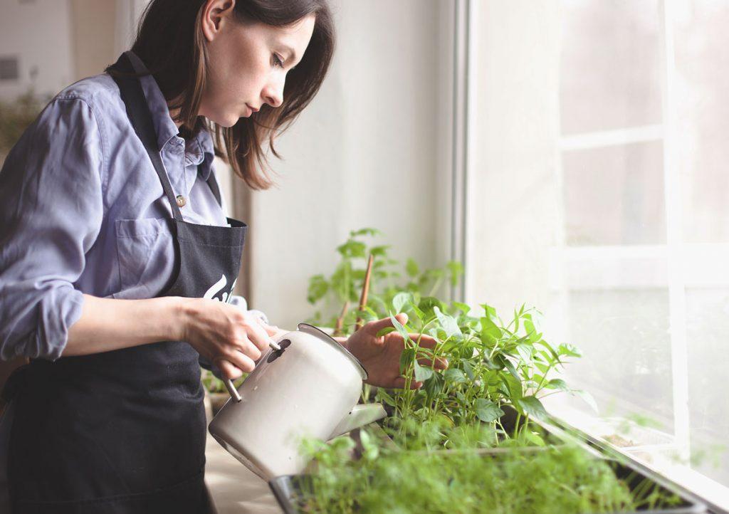 Ako pestovať baby šaláty v byte