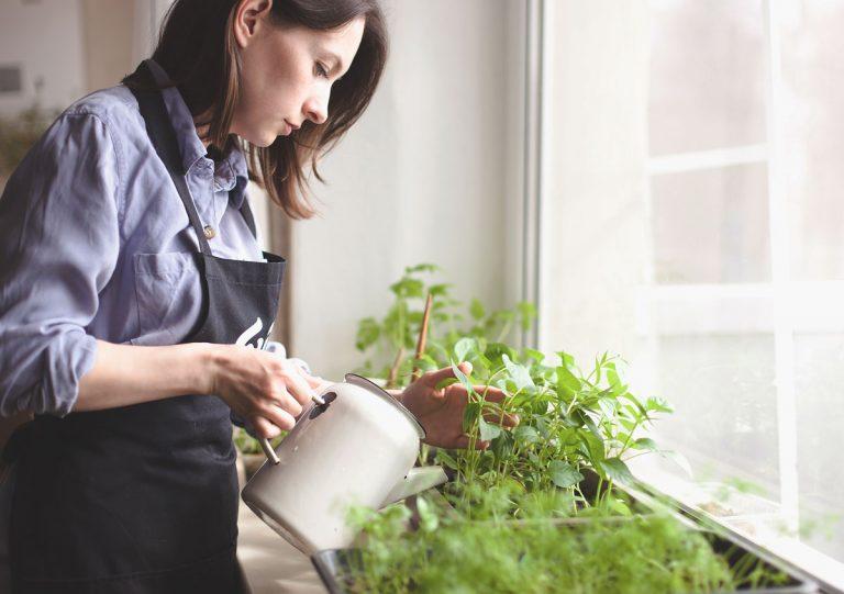 Všetko, čo potrebujete vedieť o baby šalátoch, ak ich chcete pestovať v byte