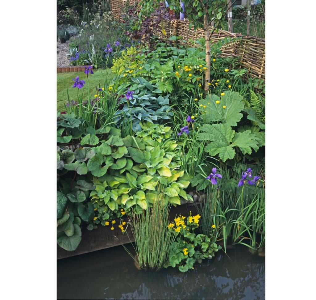 Čo so zamokrenou pôdou: záhradné močarisko
