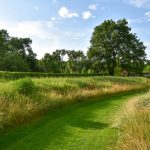 Pohľad na záhradný trávnik lemovaný trávami