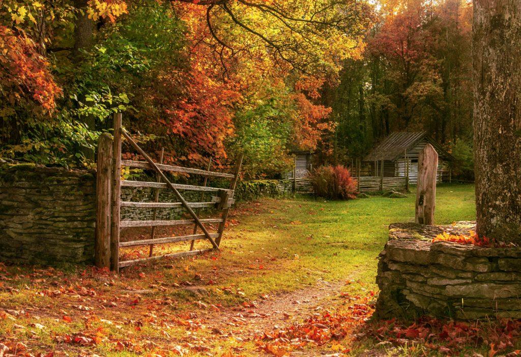 Stromy pre spestrenie jesennej záhrady