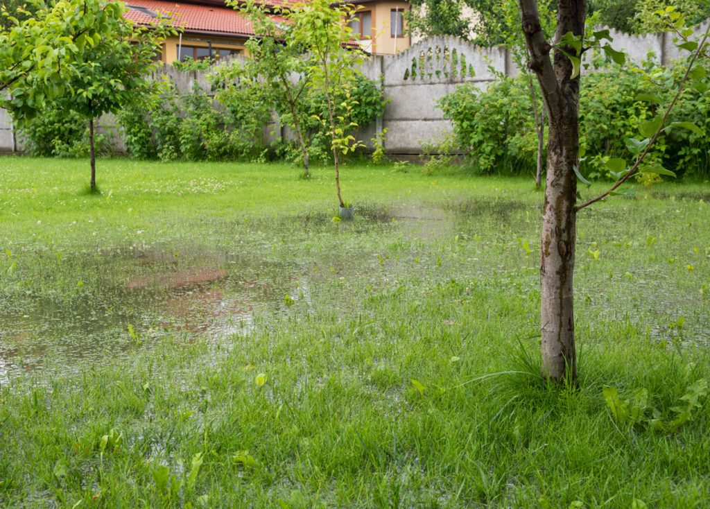 Zamokrená pôda v záhrade nemusí byť na škodu. Zmeňte ju na originálne močarisko