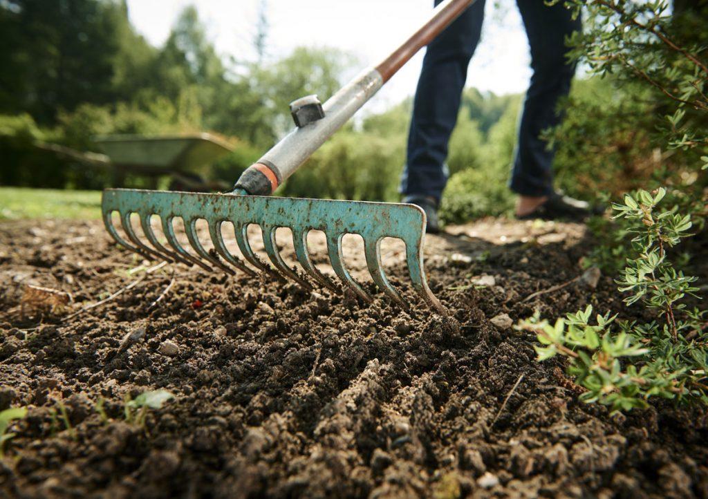 Ako mať krásnu záhradu na piesčitej pôde