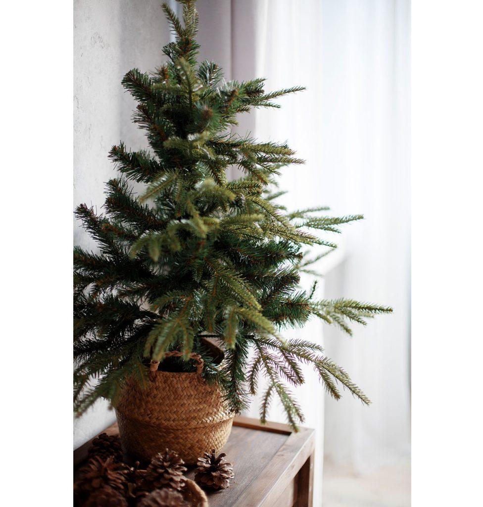 Aký druh vianočného stromčeka v kvetináči je vhodný do interiéru