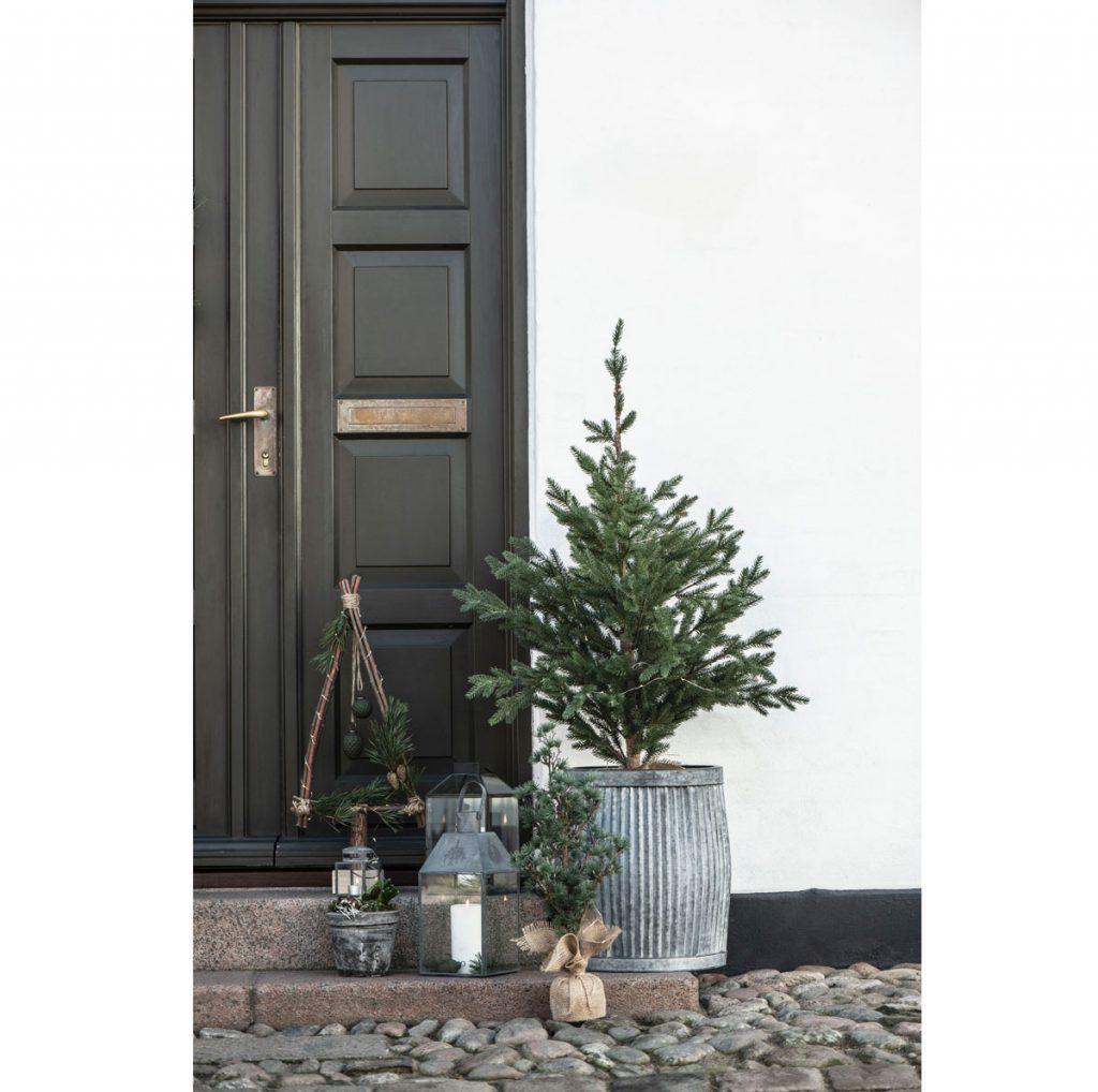 Aký druh vianočného stromčeka v kvetináči je vhodný do exteriéru