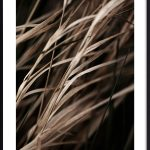 plagát so steblami trávy