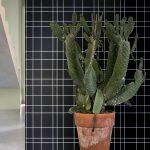 botanický štýl v interiéri: Interiér s keramickým kvetináčom s dekoratívnym kaktusom