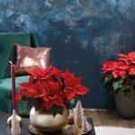 Dekorovanie s vianočnou ružou: aranžmán na podnose s vianočnou ružou v kvetináči, ktorý ladí s podnosom