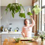 """botanický štýl v interiéri: Kvetináče s rastlinami zavesené """"dole hlavou"""""""