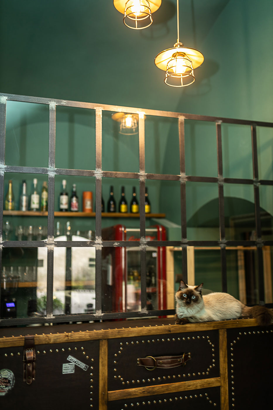 Kaviareň Ragdoll Café: Priestor mačacej kaviarne ladenej do glamour štýlu