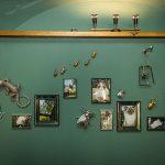 Kaviareň Ragdoll Café: Pohľad na stenu v kaviarni s dekoráciami v podobe jašterice a hmyzu, zarámovanými fotografiami ragdoll mačiek a zlatým zrkadlom v tvare slnka