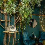 Kaviareň Ragdoll Café: Pohľad na strom so svetielkami a bydlom pre mačky, v pozadí s kútikom na sedenie