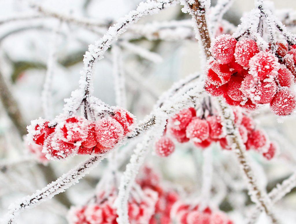 Farebná aj počas zimy. Aké rastliny oživia spiacu záhradu?