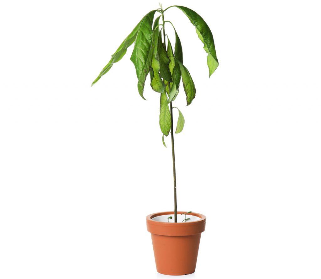 Ako sa starať o izbové kvety v zime: zhnitie koreňov
