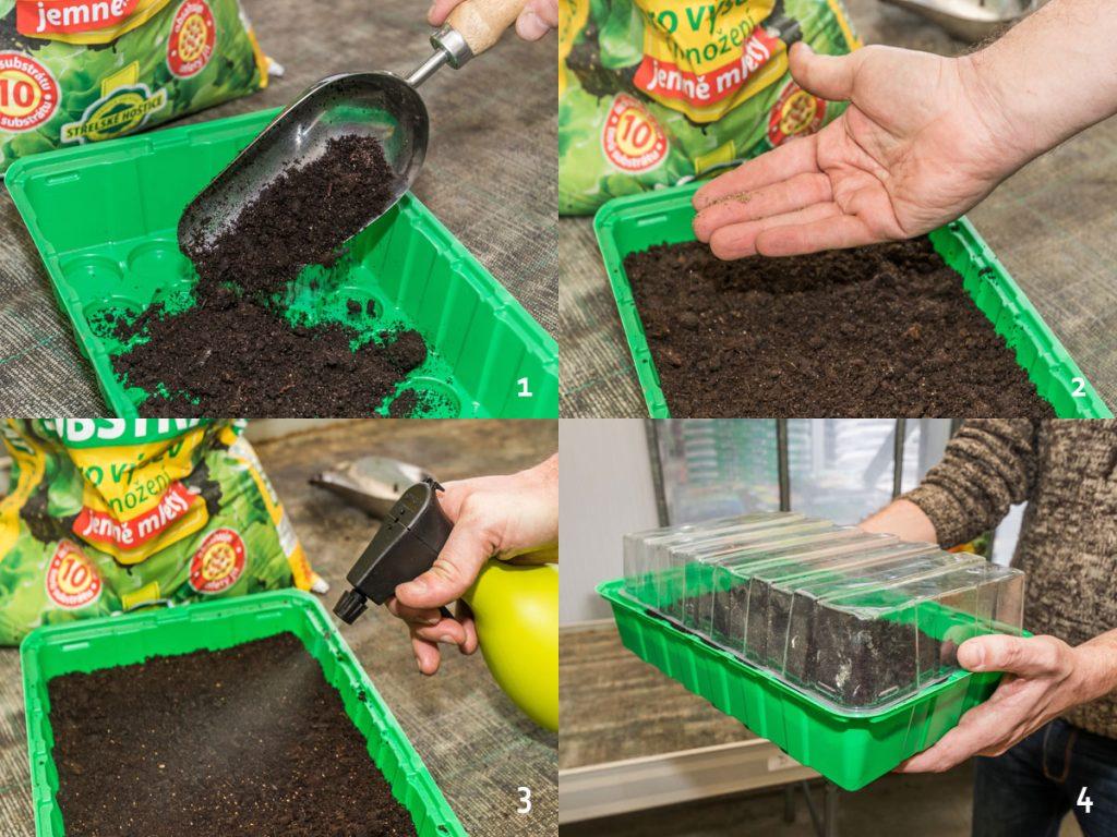 Kedy a ako vysievať paradajky: postup výsevu