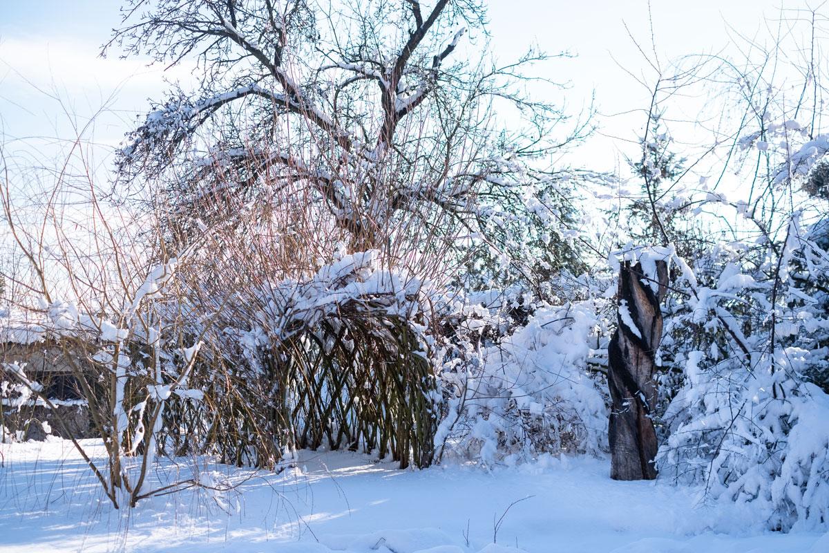 Plody mišpule v zime