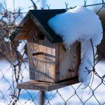 búdka pre vtáky v prírodnej záhrade