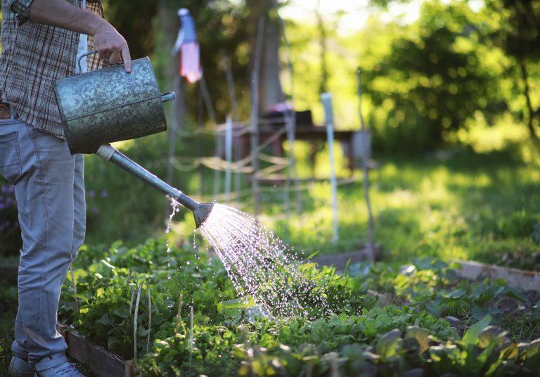 """Záhrada môže byť veľkým """"žrútom"""" vody. Ako ju využiť efektívne a do poslednej kvapky?"""