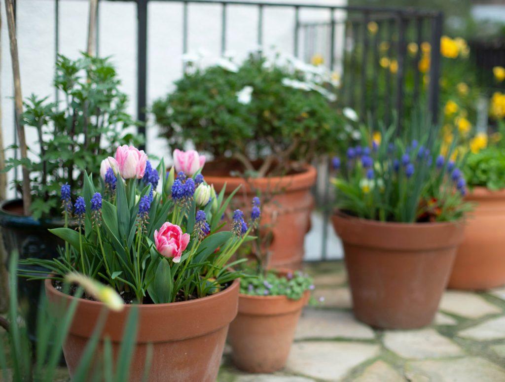 Ako vyriešiť malú záhradu: Kvetináče v záhrade s rôznymi výsadbami