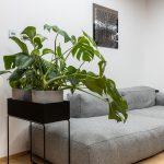 minimalistický sivý gauč so zelenými izbovými rastlinami v kovovom čiernom stojane