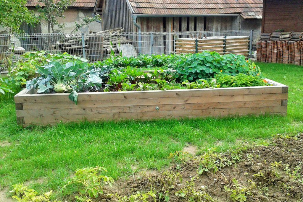 vyvýšený záhon z hranolov, v ktorom rastie zelenina